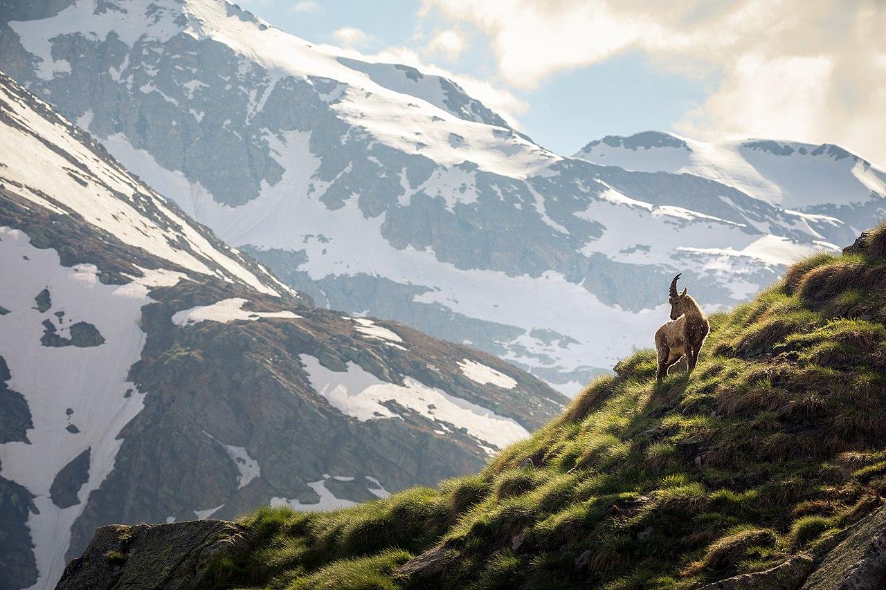 1° posto - WLE Italian Alps 2018